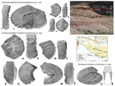 جزئیات کشف یک جنس و 6 گونه جدید سنگواره ای در ایران